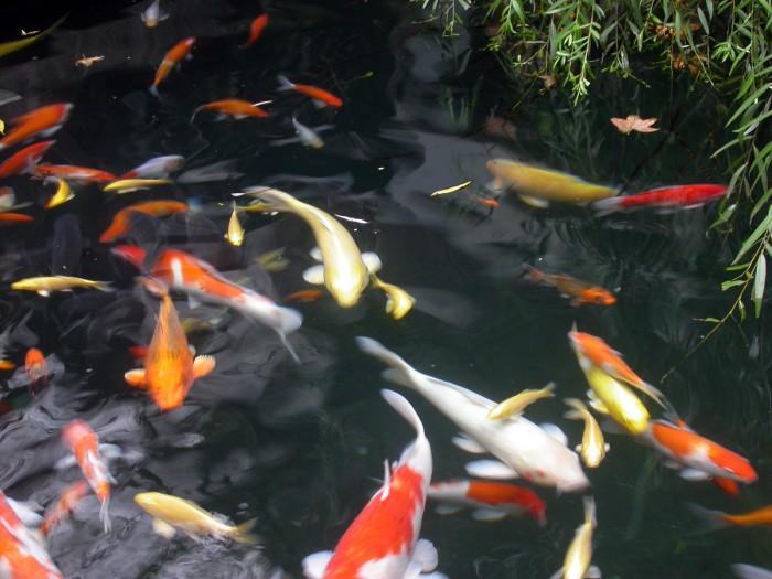 Un beau jardin potager bio en aquaponie